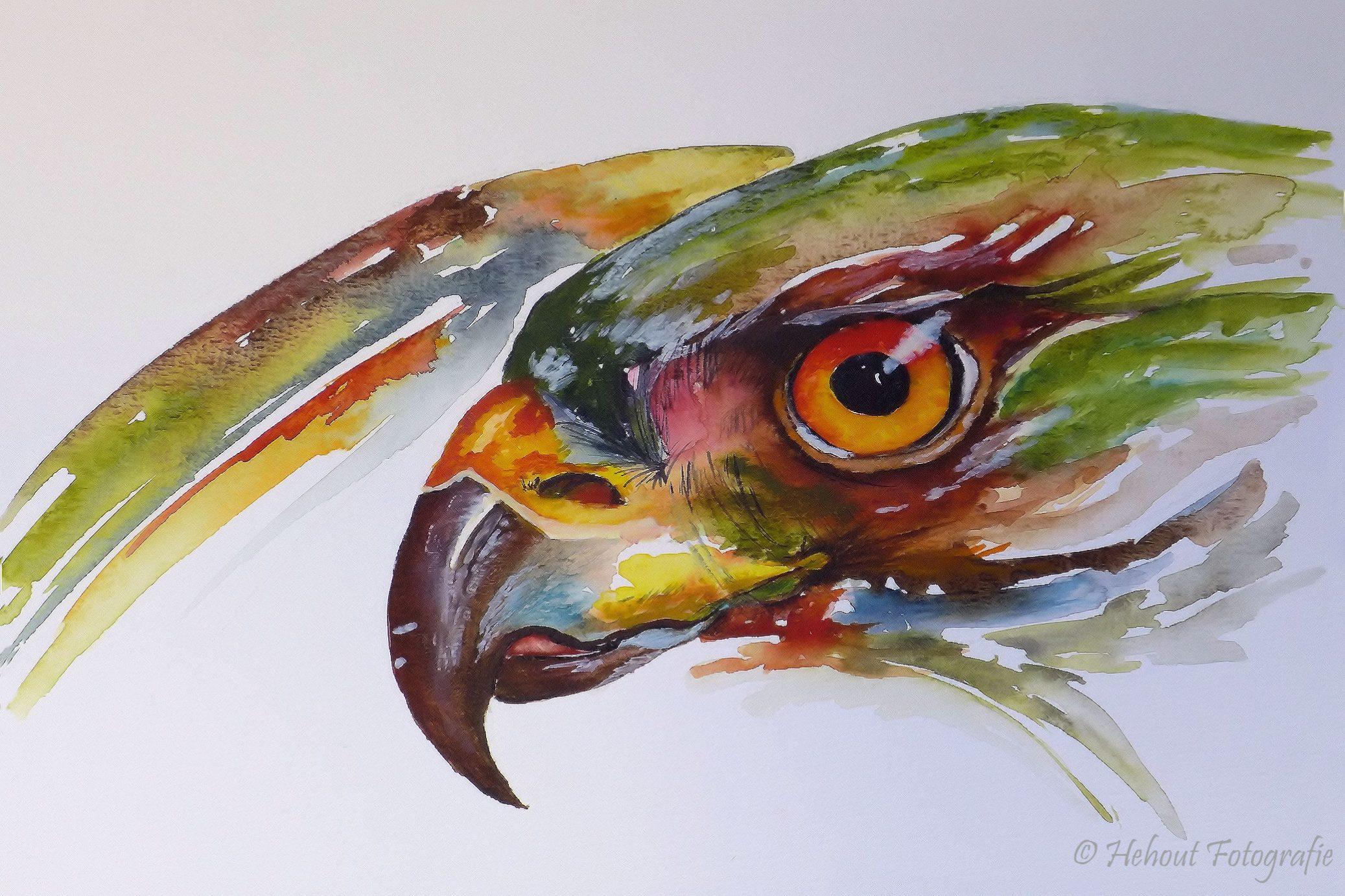 Aquarel-Roofvogel