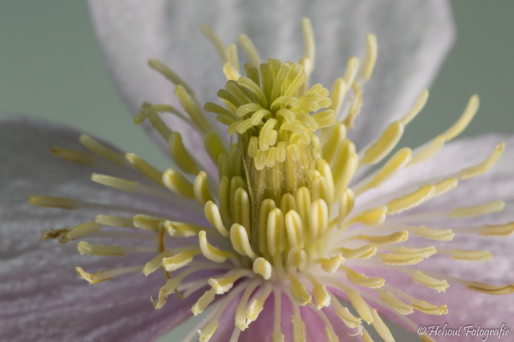 Flora-324A1887